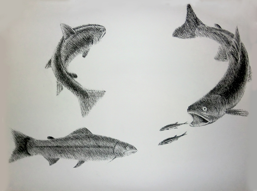 151029 Kunst -1- Designstudie Forelle